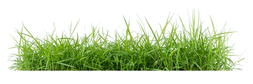Is It Better to Cut Grass or Let It Grow?
