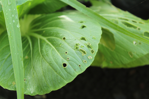 Knowing The Types of Pests In Your Garden